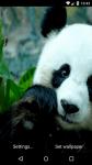 Beautiful Panda Live Wallpaper HD screenshot 6/6