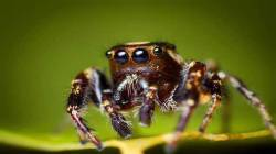 Free HD Spider Insect Animal Wallpaper for android screenshot 1/6