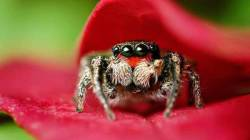 Free HD Spider Insect Animal Wallpaper for android screenshot 2/6