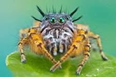 Free HD Spider Insect Animal Wallpaper for android screenshot 5/6
