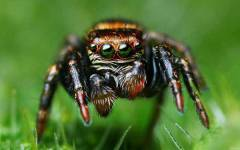 Free HD Spider Insect Animal Wallpaper for android screenshot 6/6