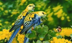 Spot Differences Birds screenshot 5/6