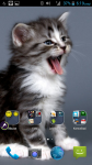 Free Pictures Of Cats screenshot 4/4