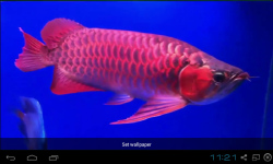 Red Arowana Live Wallpaper screenshot 1/5