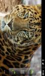 HD Wallpapers Animals in Zoo screenshot 1/6