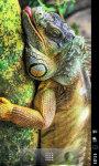 HD Wallpapers Animals in Zoo screenshot 2/6