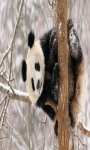 Panda Live Wallpaper Free screenshot 2/4