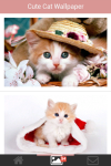 Free Cute Cats Wallpaper screenshot 1/5
