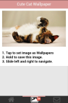 Free Cute Cats Wallpaper screenshot 3/5