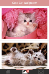 Free Cute Cats Wallpaper screenshot 5/5