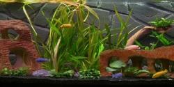 Fish Aquarium HD Android screenshot 1/6
