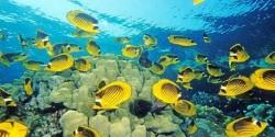 Fish Aquarium HD Android screenshot 3/6
