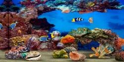 Fish Aquarium HD Android screenshot 4/6