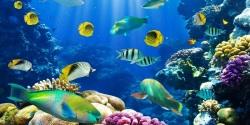 Fish Aquarium HD Android screenshot 5/6