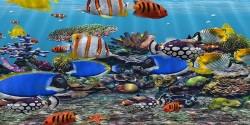 Fish Aquarium HD Android screenshot 6/6