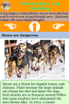 Rules to play Dog Sledding screenshot 3/3