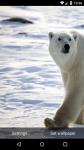 Beautiful Polar Bear Live Wallpaper HD screenshot 1/6