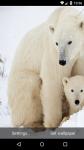 Beautiful Polar Bear Live Wallpaper HD screenshot 2/6