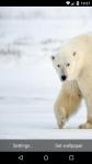 Beautiful Polar Bear Live Wallpaper HD screenshot 3/6