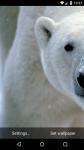 Beautiful Polar Bear Live Wallpaper HD screenshot 4/6