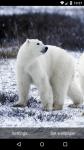 Beautiful Polar Bear Live Wallpaper HD screenshot 5/6