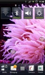 Beautiful Sea Anemone Live Wallpaper screenshot 1/3