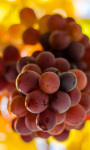 Grapes Live Wallpaper screenshot 1/3