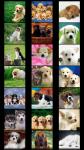 Dogs Wallpapers free screenshot 1/5