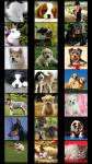Dogs Wallpapers free screenshot 2/5