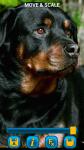 Dogs Wallpapers free screenshot 5/5