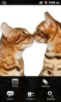 Cat Calendar screenshot 3/3