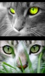 Cute Kittens - kitty  screenshot 1/4