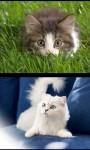 Cute Kittens - kitty  screenshot 2/4