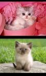 Cute Kittens - kitty  screenshot 3/4