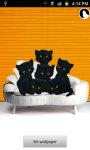 Cute Kittens Live Wallpaper free screenshot 1/5