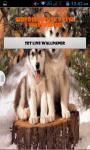 Siberian Husky Live Wallpaper Best screenshot 1/4