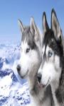Siberian Husky Live Wallpaper Best screenshot 2/4
