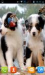 Dog Puppies Live Wallpaper Best screenshot 2/4