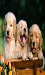 Dog Puppies Live Wallpaper Best screenshot 3/4