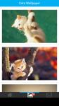 Free Cats Wallpapers screenshot 2/6