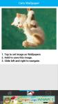 Free Cats Wallpapers screenshot 3/6