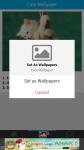 Free Cats Wallpapers screenshot 4/6