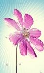 Flower Star Live Wallpaper screenshot 2/3