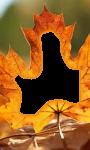 Autumn photo screenshot 2/4