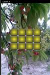 Fruit Lag screenshot 1/5