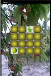 Fruit Lag screenshot 2/5