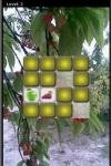Fruit Lag screenshot 4/5