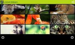 Amazing Animals Wallpapers Free screenshot 3/6