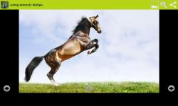 Amazing Animals Wallpapers Free screenshot 4/6