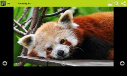 Amazing Animals Wallpapers Free screenshot 5/6